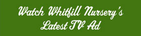 Whitfill TV Banner